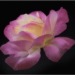 september-open-salon_janet-bongiovanni_honorable-mention_folds-of-pink-and-yellow_20160926