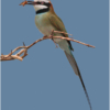 october-open-salon_bee-eater-with-bee_ben-venezio_top-award_20161024