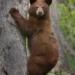 october-open-salon_brown-black-bear_nick-palmieri_top-award_20161024