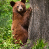 January Open Salon_Bear Cub_Nick Palmieri_Top Award_20170123