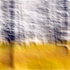 Feb. Assigned SalonMotion_Snowstorm in Yellowstone_Janet Bongiovanni_Honorable Mention_20170227
