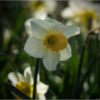 April Open B_Finally..Spring!_Dyan Bryson_Honorable Mention_20170424