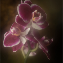 Orchids in the Mist_Ellen Stein_Open A_Equal Merit