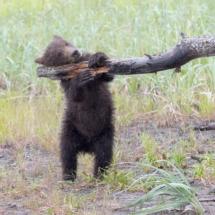 Baby Bear_Nick Palmieri_Open Salon_Honorable Mention