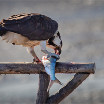 Catch of the Day_Ellen Stein_Open A_Honorable Mention