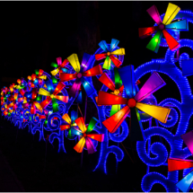 Chinese Lantern Flowers_Ellen Stein_Assigned A Night Photography_Equal Merit