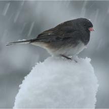 Its Snowing_Ron Denk_Open Salon_Equal Merit