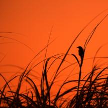 Seaside Silhouette_Arlene Sopranzetti_Open A_Equal Merit