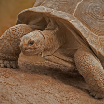 Tortoise_Ron Denk_Open Salon_Honorable Mention