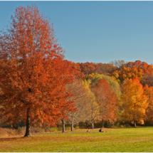 Autumn In Its Splendor_Ron Denk_Assigned Salon Landscapes_Honorable Mention