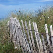 Dune_Carol Gaffney_Assigned B Landscapes_Honorable Mention