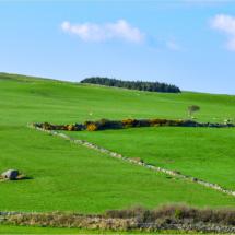 Irish Pasture_Lisa Blake_Assigned B Landscapes_Equal Merit