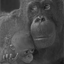 Mother And Child #2_Ron Denk_Open Salon_Honorable Mention