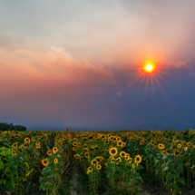Sunflowers at wildfires twilight_Chris Manning_Open B_Honorable Mention
