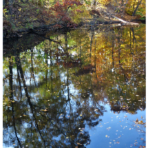 Autumn Leaves_Wendy Kaplowitz_Assigned B Water_Honorable Mention