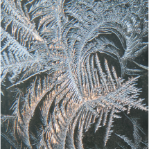 Frost Pattern_Ron Denk_Assigned Salon Water_Equal Merit