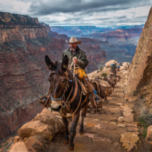 Mules in the Grand Canyon_Ryan Kirschner_Assigned Salon Transportation_Equal Merit