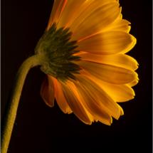 flower_Michael Augustyniak_Open Salon_Equal Merit
