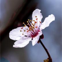 Flower_Michael Augustyniak_Open Salon_Honorable Mention