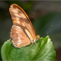 Butterfly on Leaf_Ellen Stein_Open Salon_Equal Merit