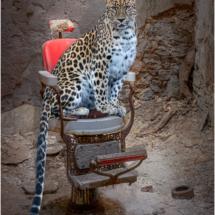 Cat in Chair_Ellen Stein_Open Salon_Honorable Mention