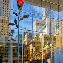 Urban Garden Rose