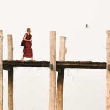 Monk Contemplating a Swallow_James Bluck_Open B_Equal Merit
