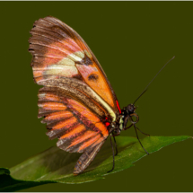 Butterfly on Leaf_Ellen Stein_Assigned Salon Zoology & Domestic Animals_Equal Merit