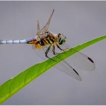 Dragonfly_Lenny McDonald_Open B_Equal Merit