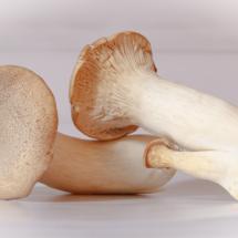 Mushroom Trio_Christine Truhe_Assigned B Macro & CloseUp Food_Equal Merit