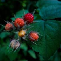 Raspberries_Wendy Kaplowitz_Open B_Honorable Mention