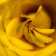 Yellow Velvet Swirl_Giselle Valdes_Open A_Equal Merit