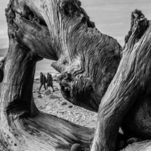 #dpstrees Wreck Beach, Vancouver, BC, Canada; Sony ILCE