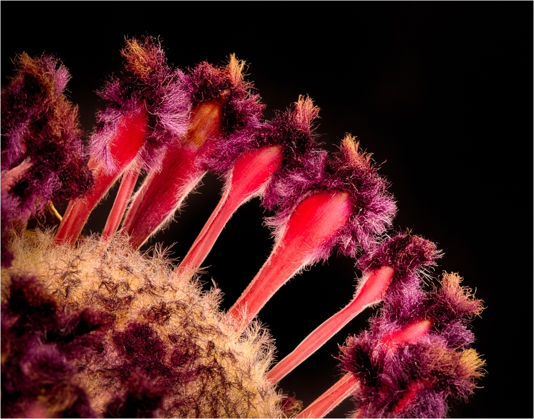 Image of the Month - A - Protea Rock Band by Dave Williams