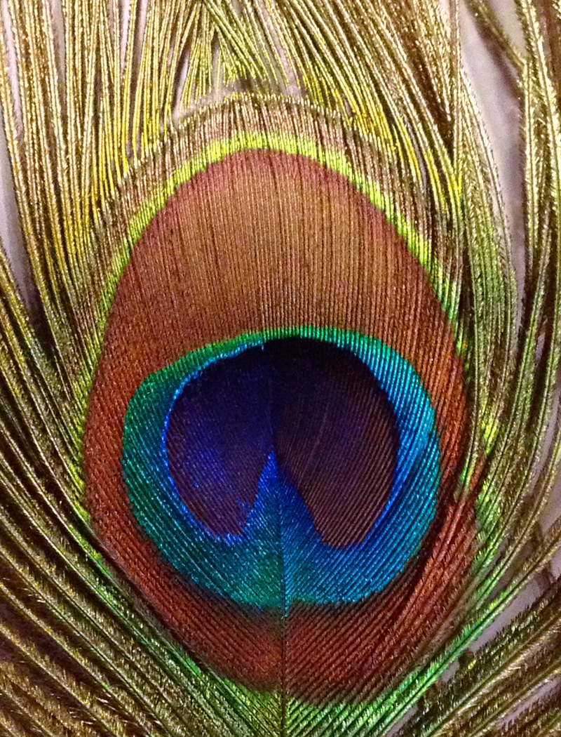 Image of the Month - B - Feather by Carol Gaffney