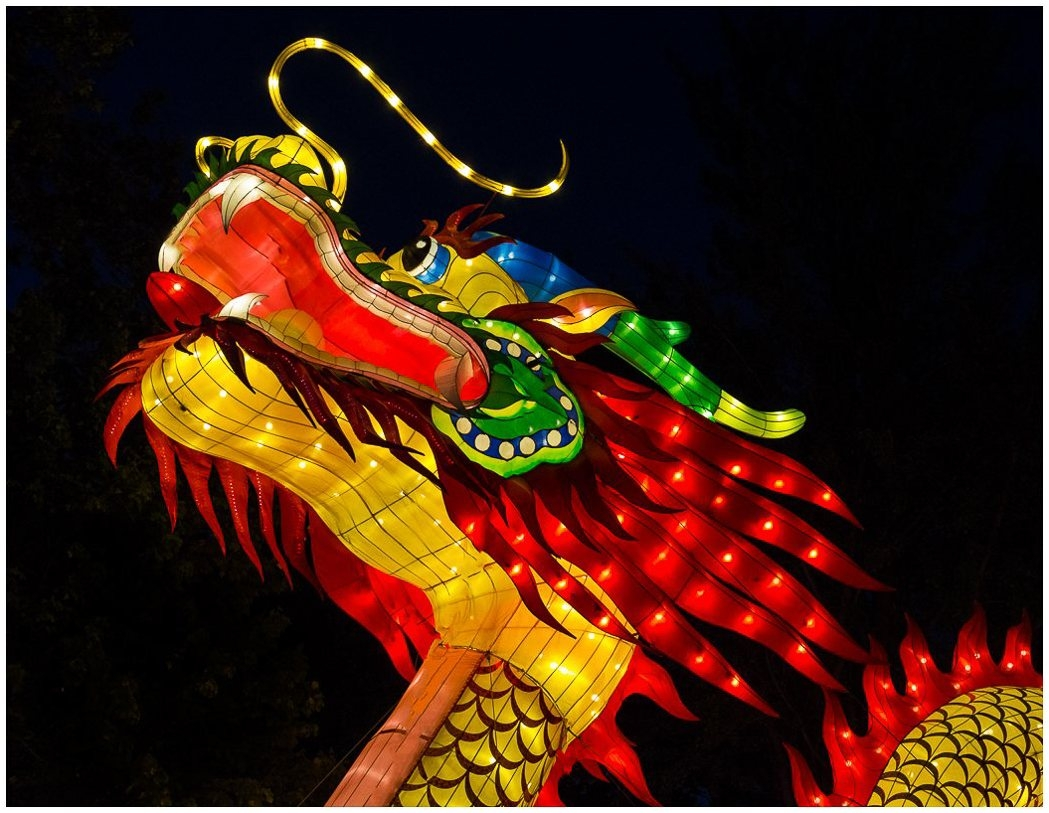 Image of the Month - B - Chinese Lantern Dragon by Ellen Stein